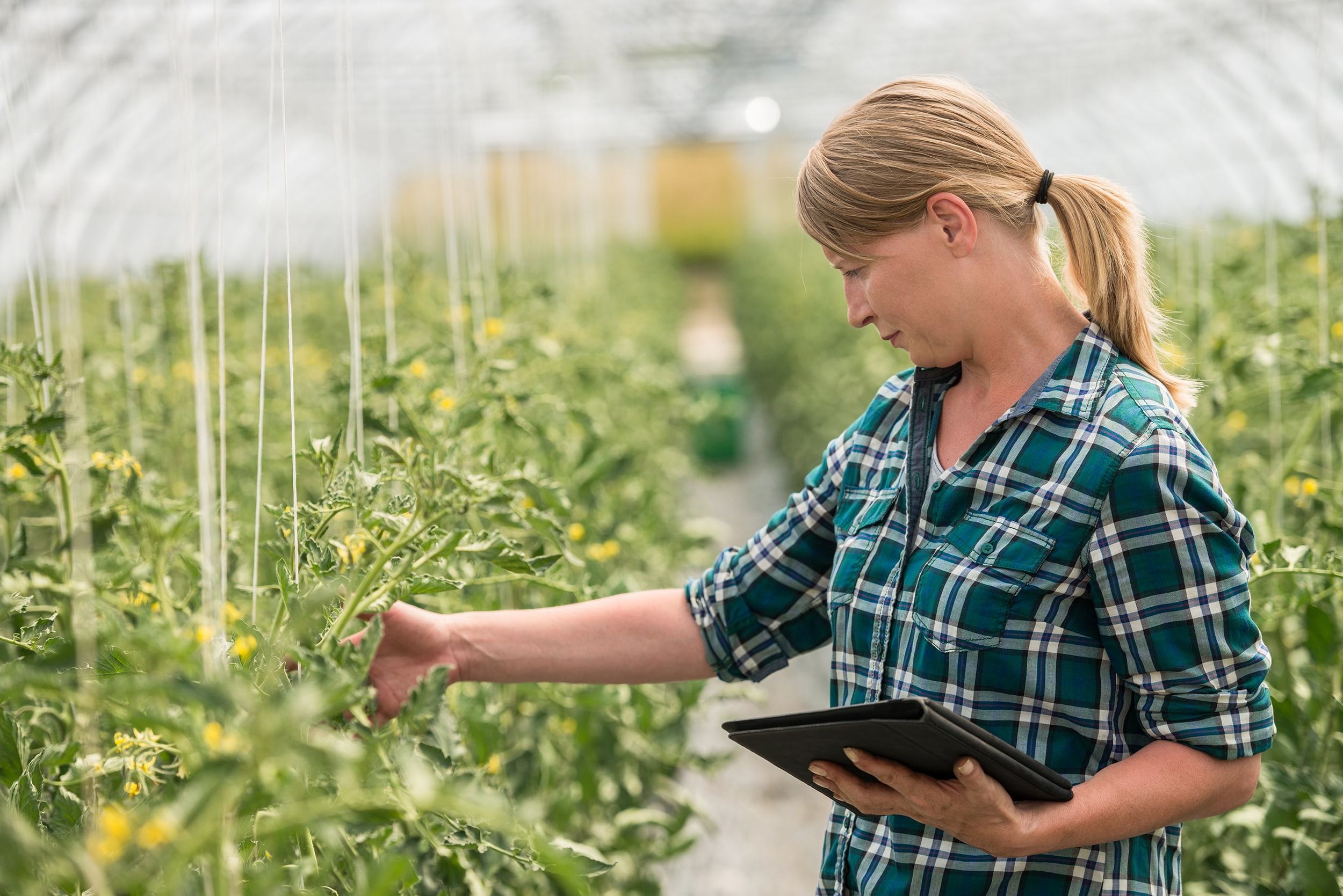 Woman in Plant Nursery With Tablet